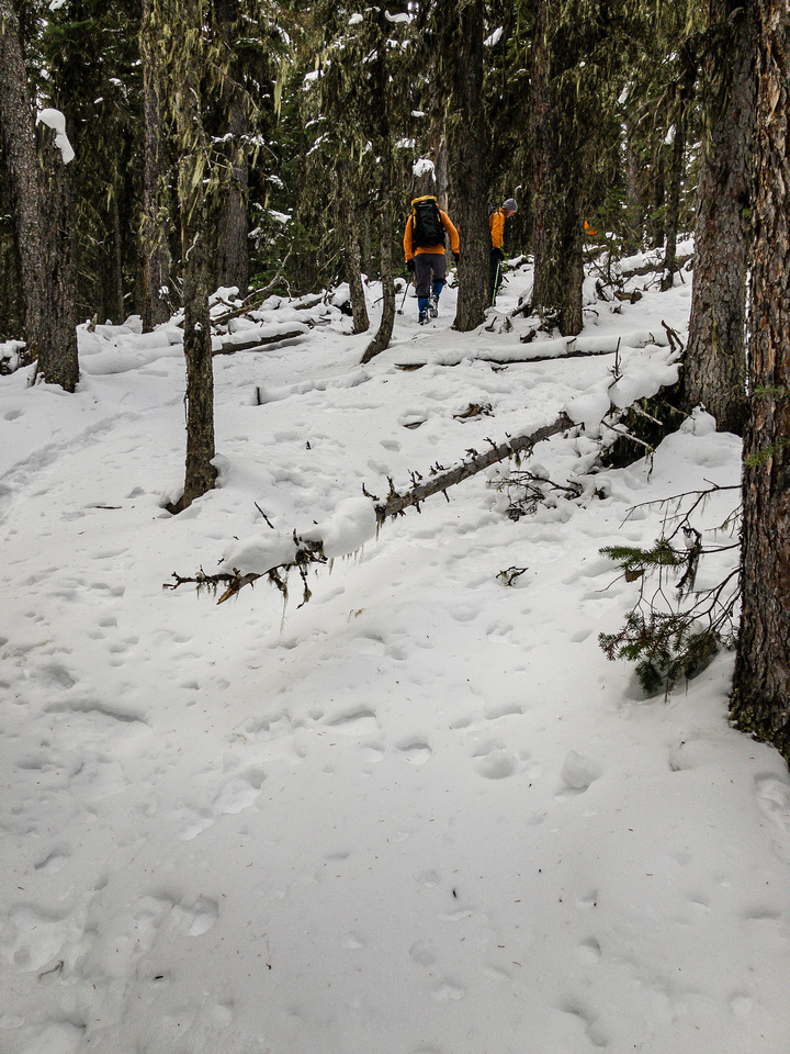 Finally gaining height on an obvious trail through the light forest.
