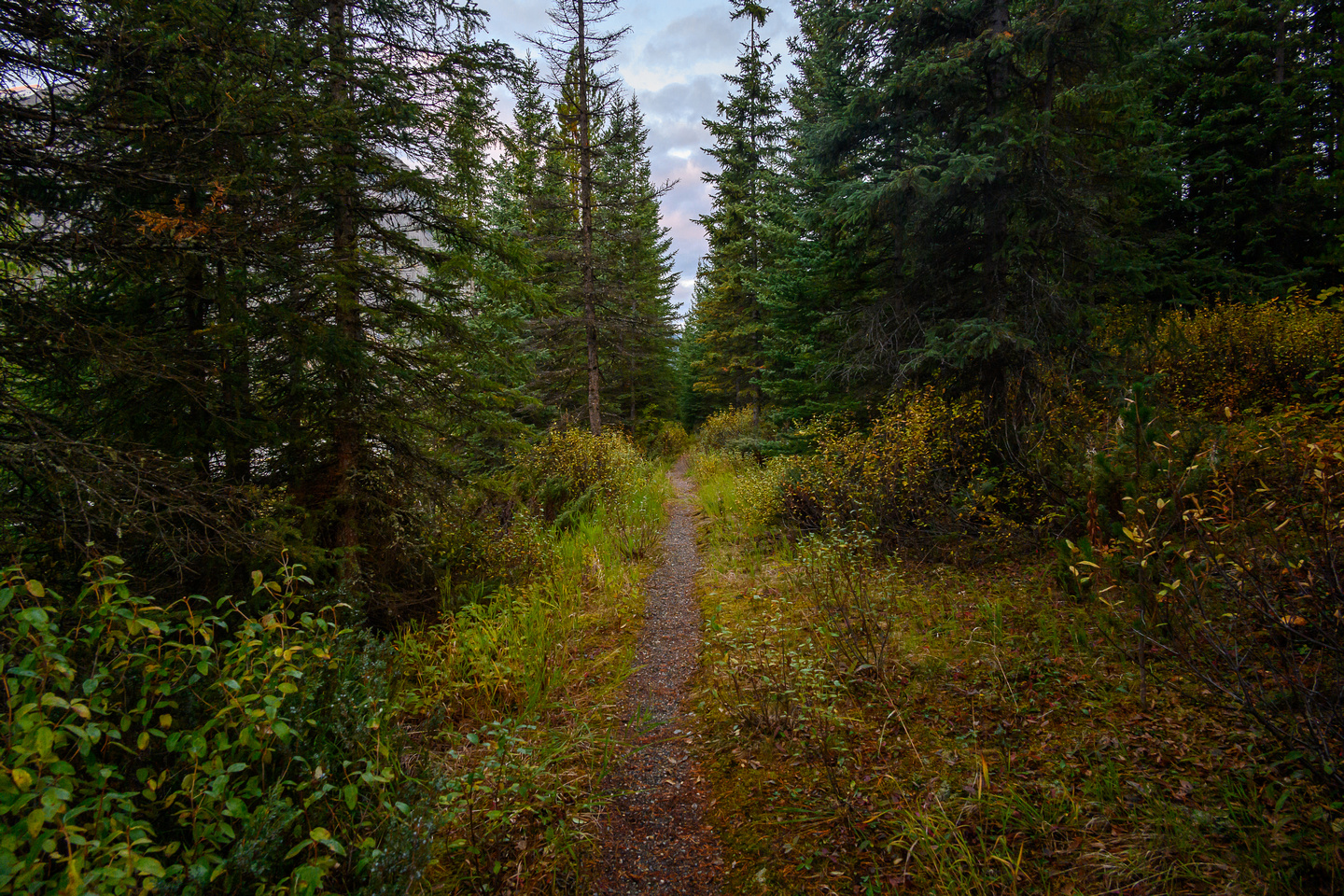 Starting out along the Hawk Creek / Ball Pass trail along hwy 93.