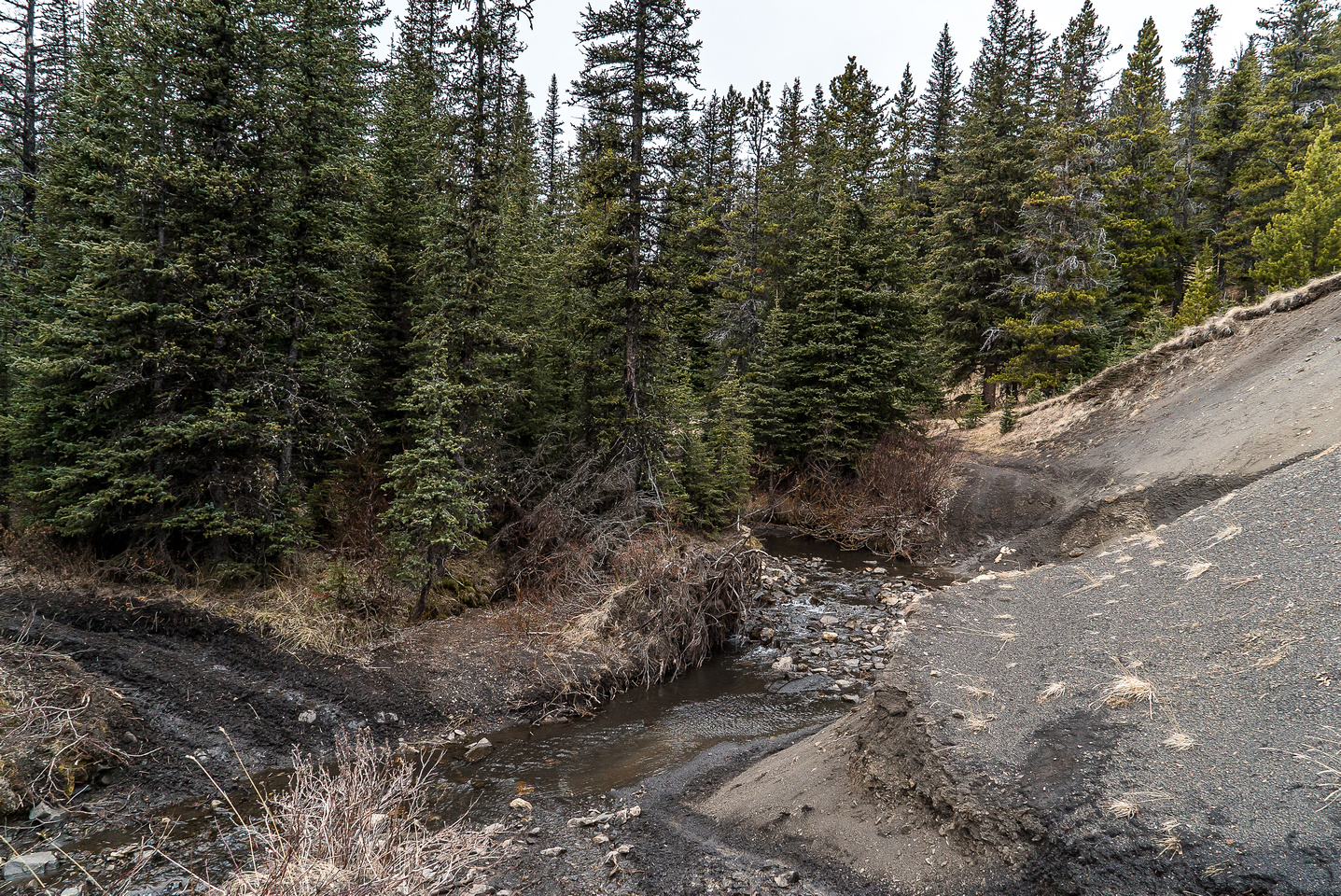 This section of Isolation Creek is along a washed out section of the road.