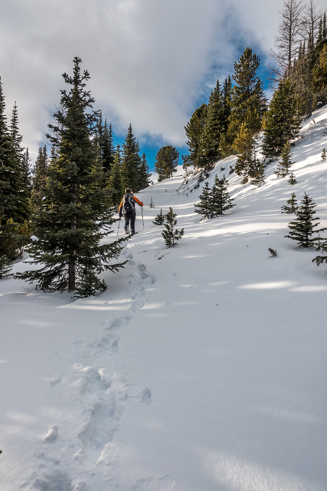 Phil breaks trail in the sugary, fresh snow.
