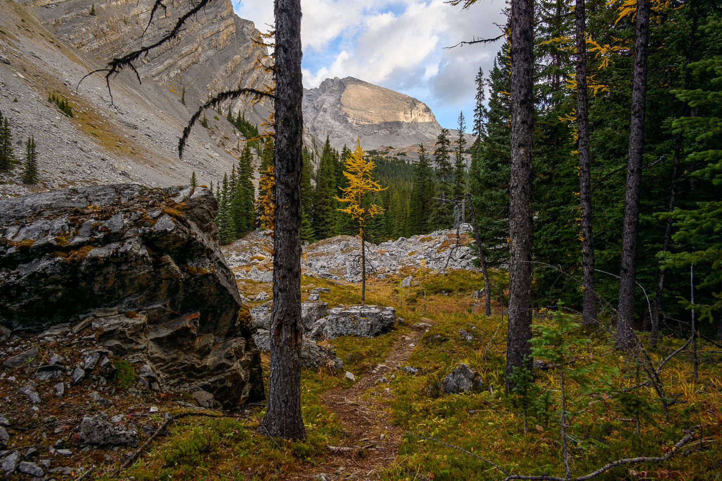 Hiking up James Walker Creek, entering a small larch forest.