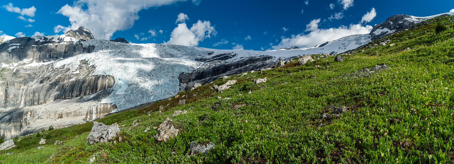 Brilliant green alpine meadows contrast with the rock, snow and ice in the distance.