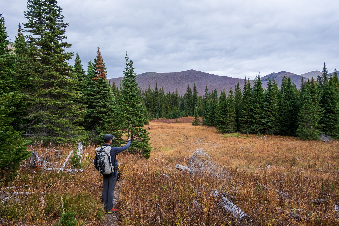 Hiking the Tamarack trail / GDT from Lone Lake to the South Kootenay Pass trail.