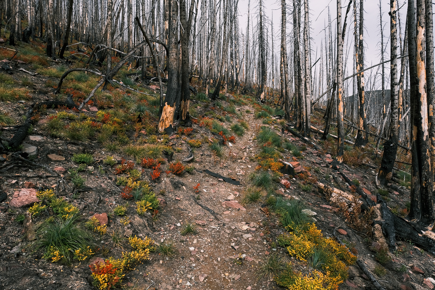 Ascending the South Kootenay Pass trail.