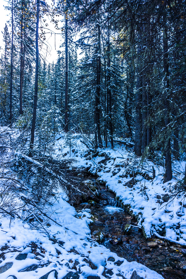 A small creek that I crossed soon after leaving the Evan-Thomas trail.