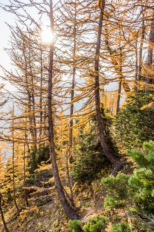 Fall colors as I work my way climber's right through the larch forest on the ridge. I was covered with larch needles after this!