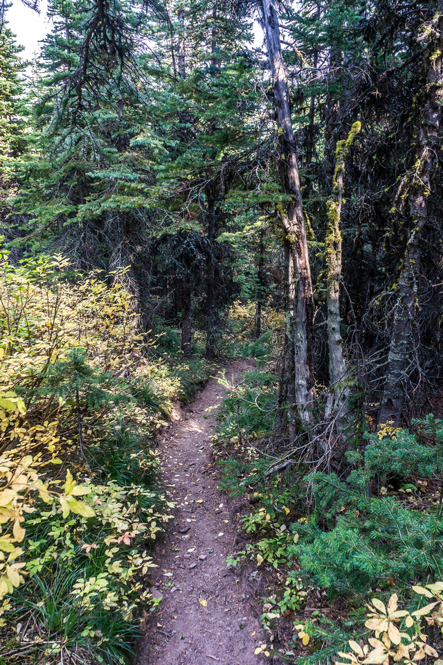 Eventually the exit trail reluctantly starts descending through forest, down to Pincher Creek.