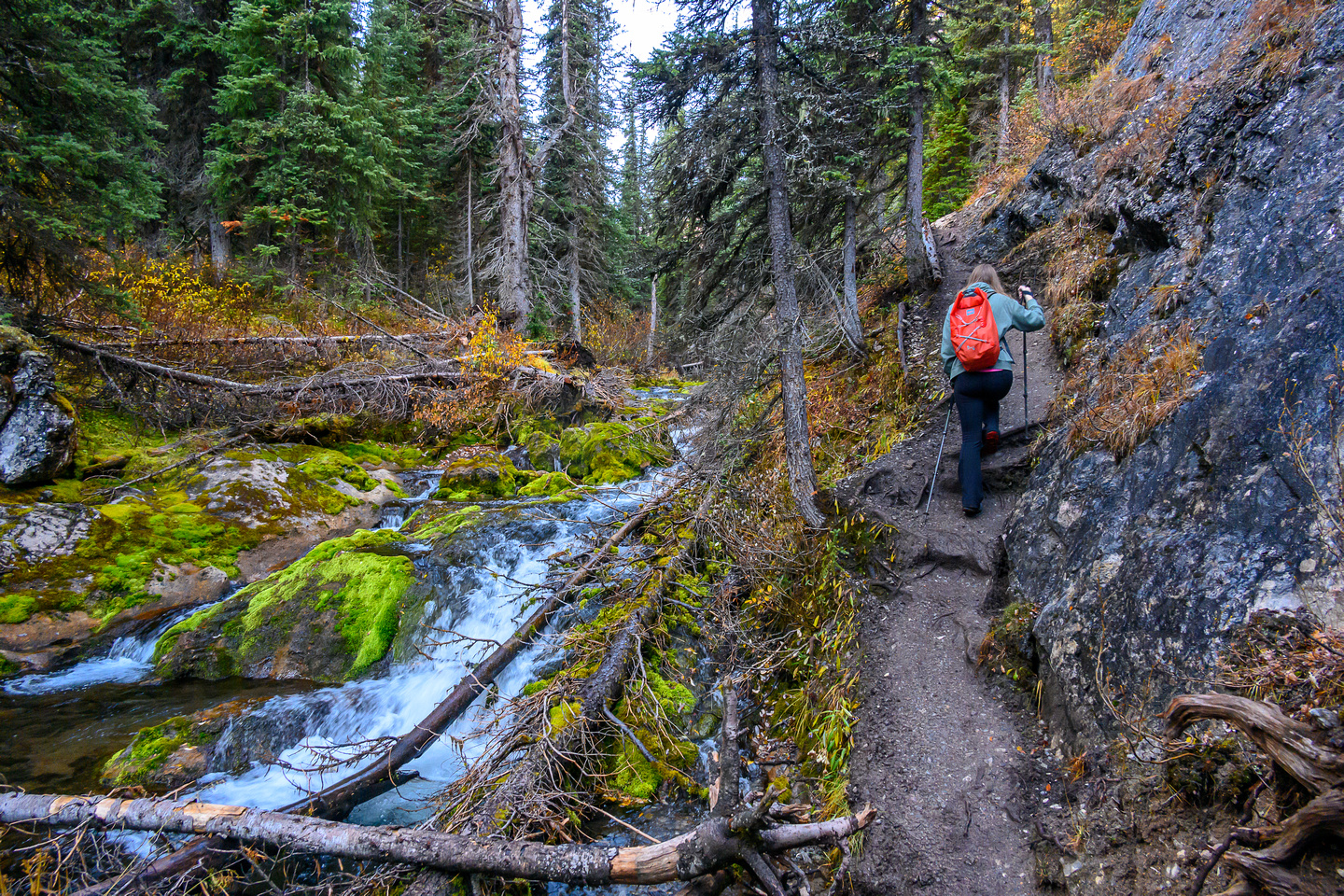 The trail narrows and grows muddy along Commonwealth Creek.
