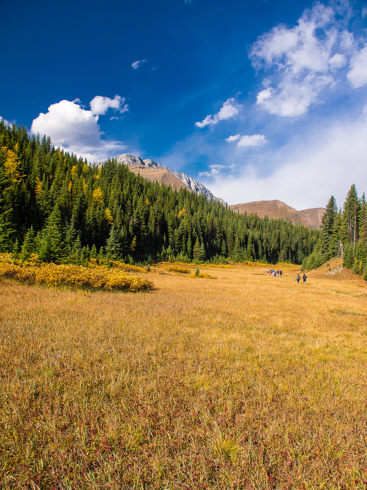 A very popular hike, this is starting down the trail near the parking lot at Highwood Pass.