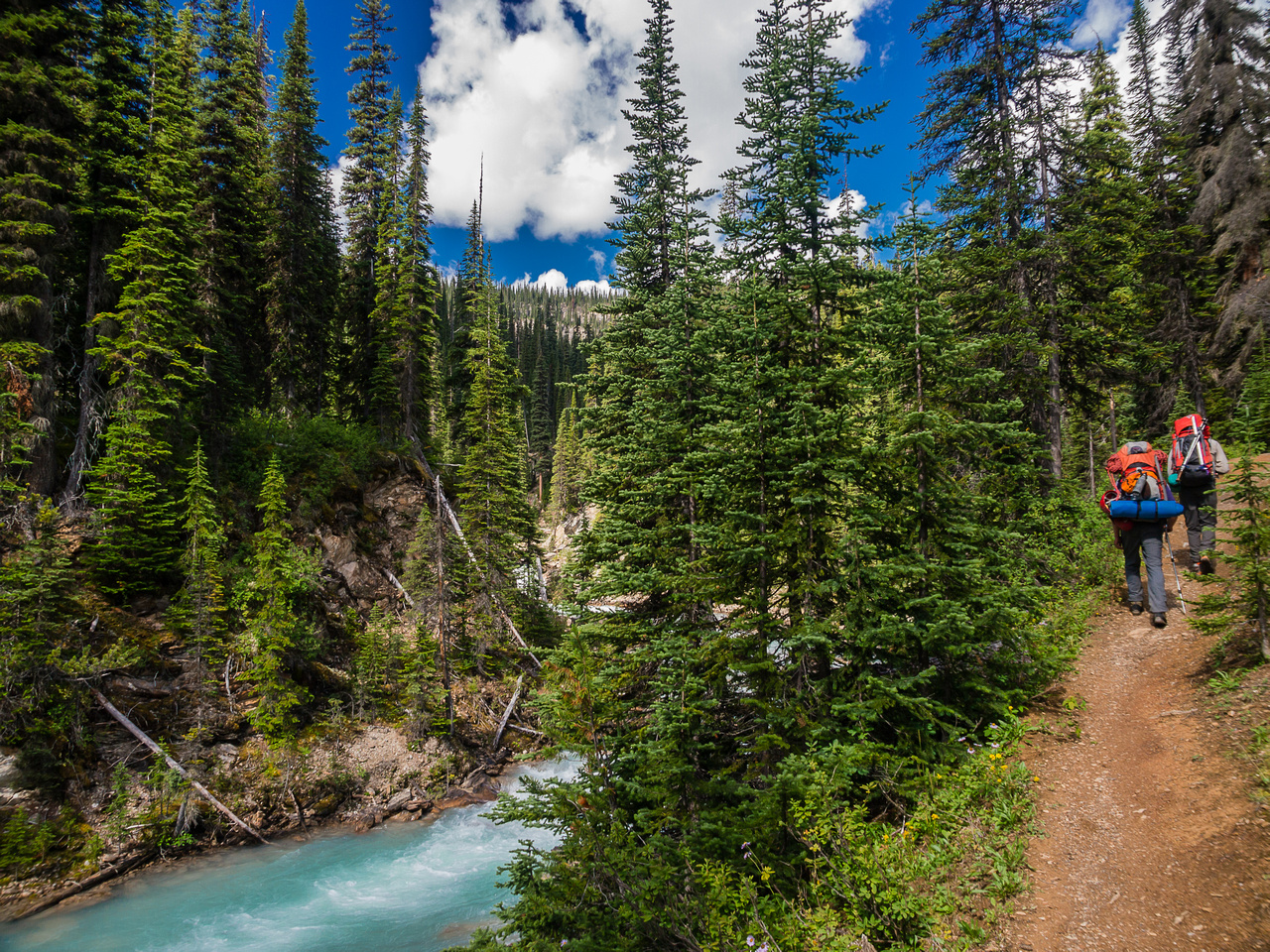 Getting further above the Twin Falls Creek before it joins the Yoho River.