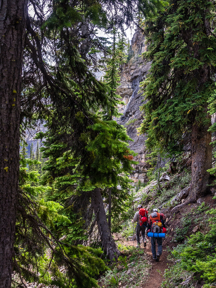 Descending the steep Twin Falls trail back to the Little Yoho Valley.
