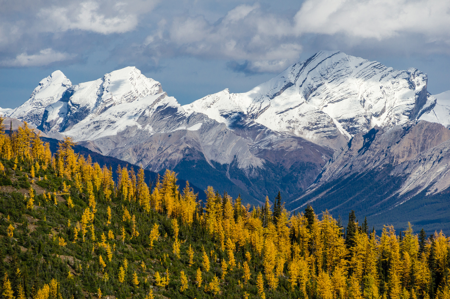Larches and Skoki peaks.