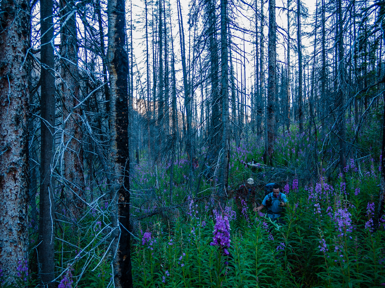 I've never encountered such deep fireweed before! The fact that it was soaking wet didn't help either.
