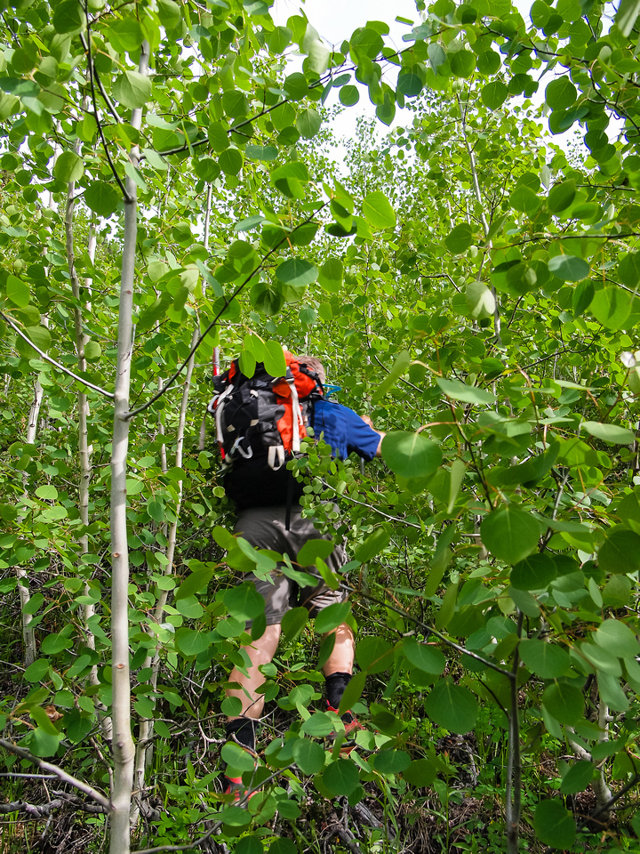 Yep! There's some degree of bushwhacking on the side hill traverse. We angled slowly up to climber's left too.