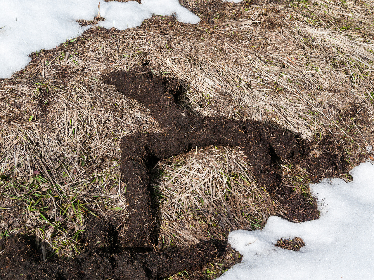 Interesting shapes with the thawing ground.