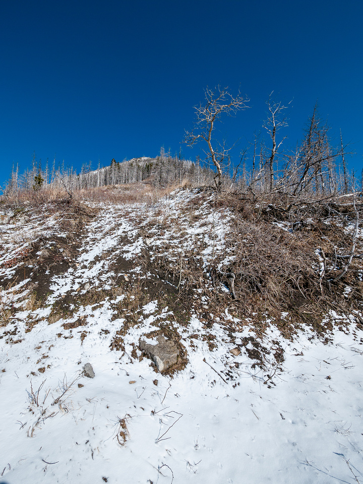 We cut up the first obvious break in the vegetation to our right, up the south ridge.