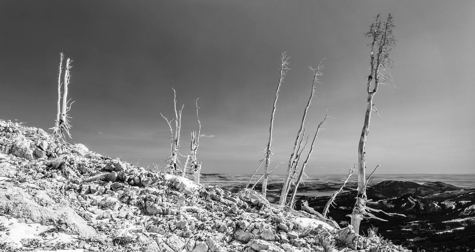 More cool looking dead trees on the south ridge.