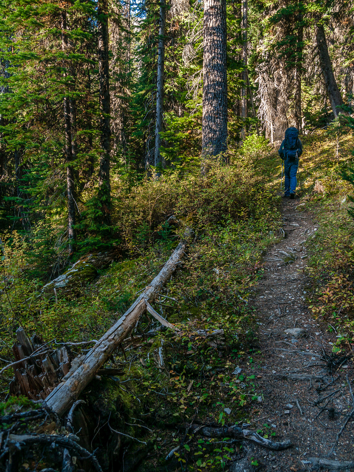 The trail is well defined through the forest.