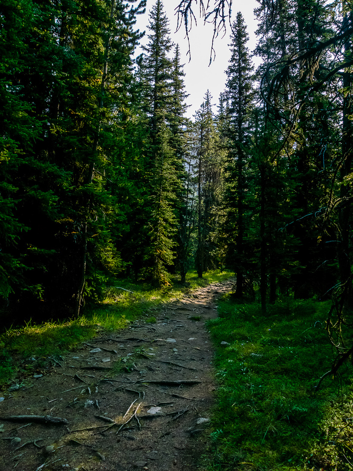 The trail is very well-used.
