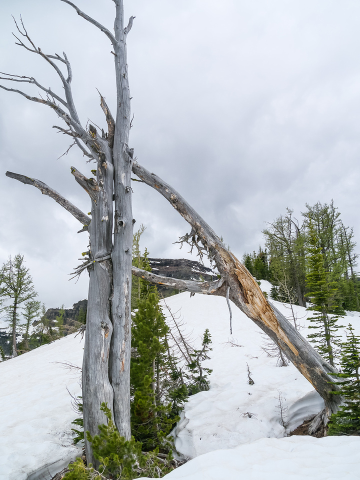 The crux of the ridge can be seen through the deadfall on Forum Ridge.