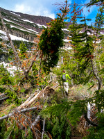 Lots of deadfall and avi debris on the trail above Goat Lake.