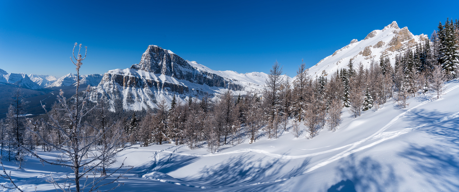 Panorama in the larch forest looking towards Helena Peak (R) and Eisenhower Tower (L).