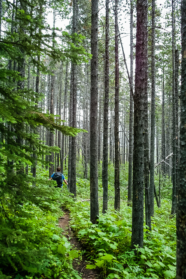Green forested trail.