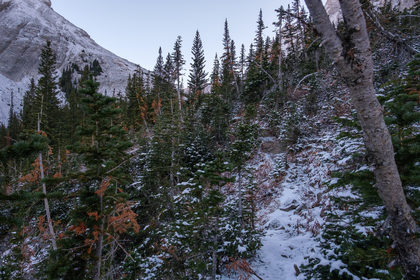 Hiking up through trees and a lower headwall.