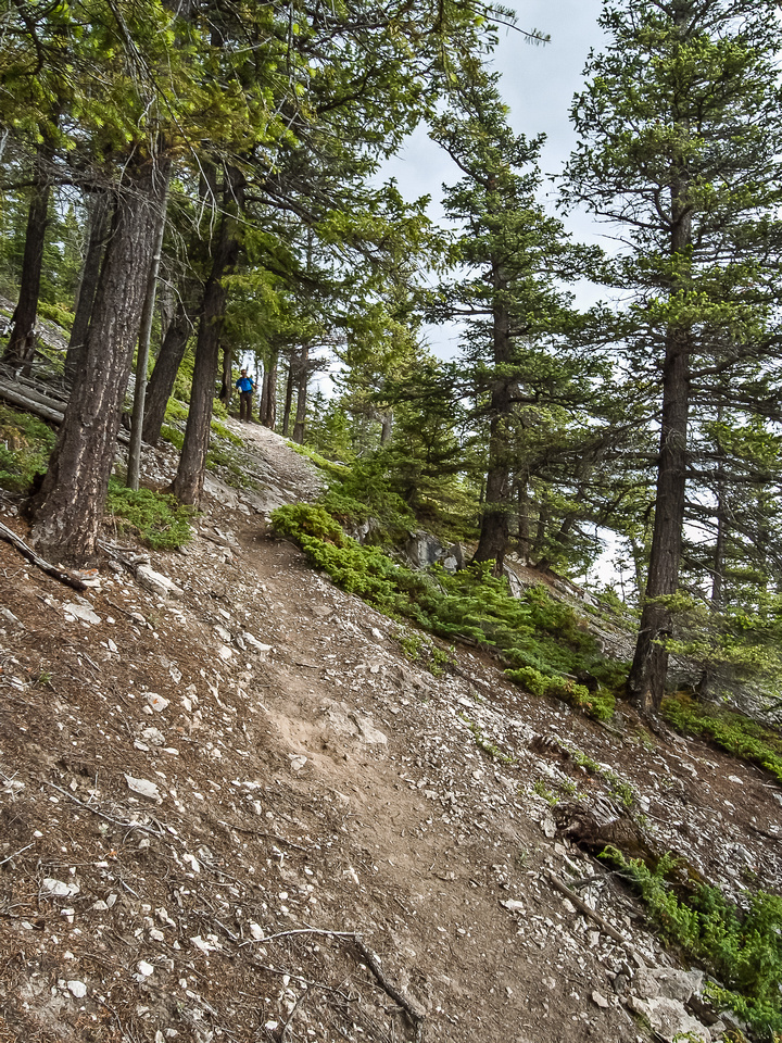 The trail is easy to follow through open forest lower down.
