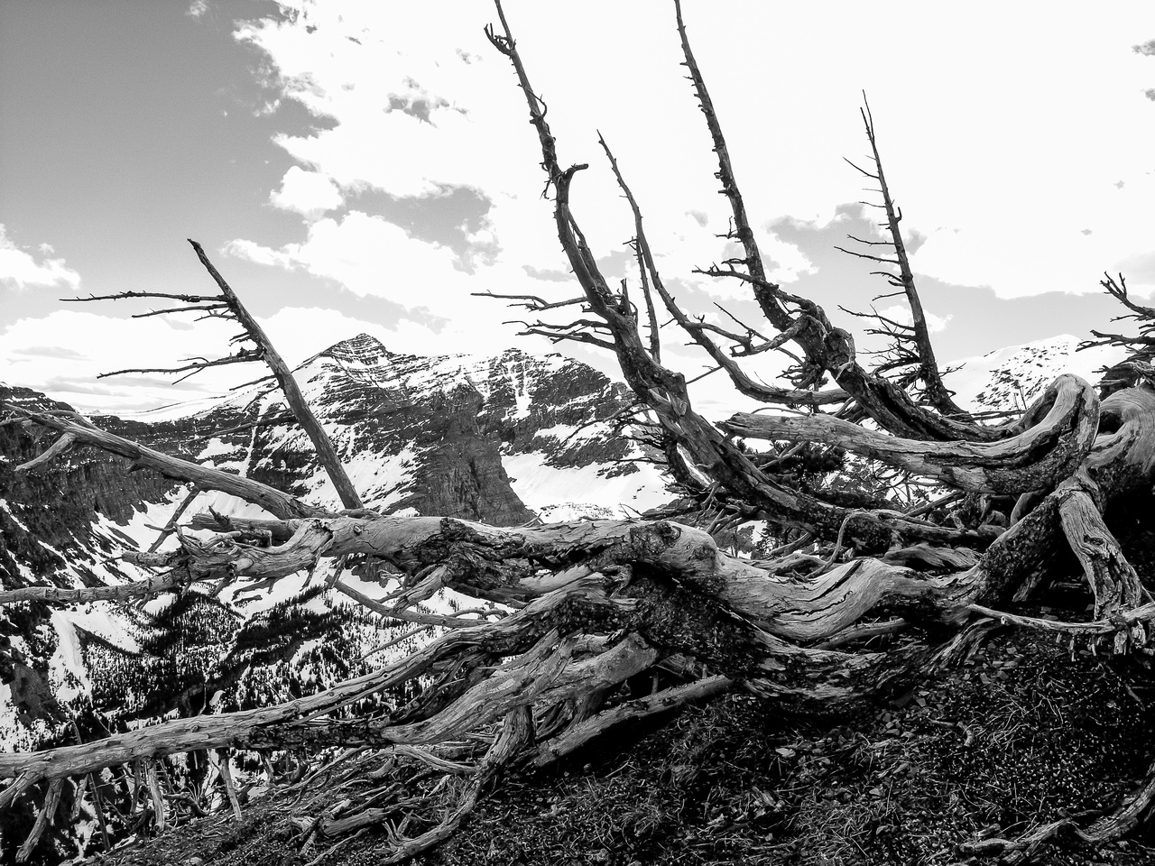 Typical dead tree scenery for the Castle Wilderness.
