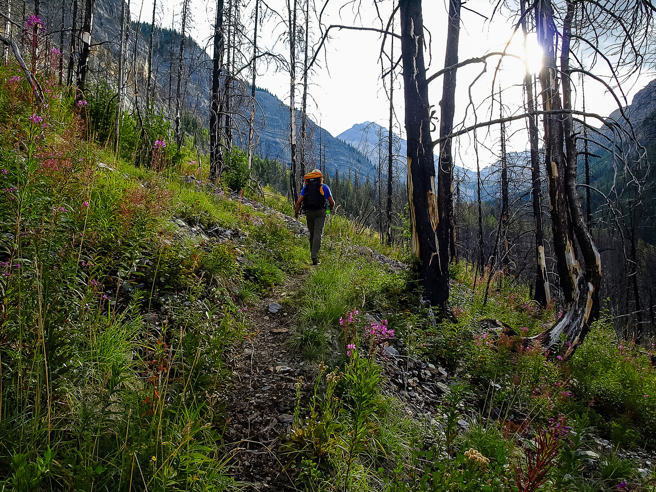 Hiking up the trail through the burnt forest gives tons of excellent photography opportunities.
