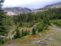 It's a grey day as we head up the Boulder Pass trail to the Hidden Lake turn off.