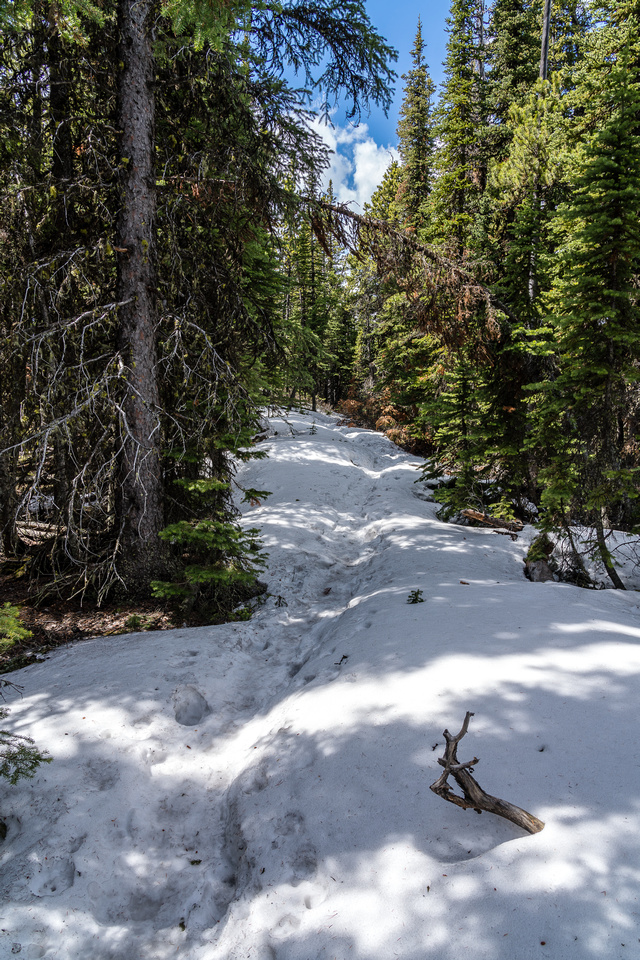 The mid-mountain trail was still snow covered but thankfully tracked out.