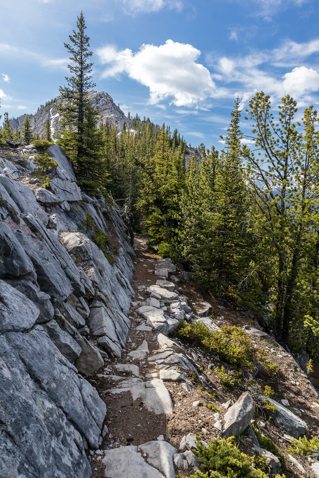 Hiking the SE ridge of Sulphur Mountain.
