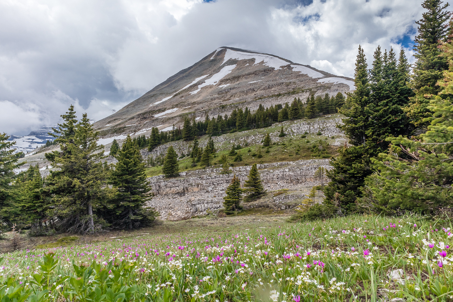 The meadows between Mount Armstrong and Bolton are full of wildflowers.