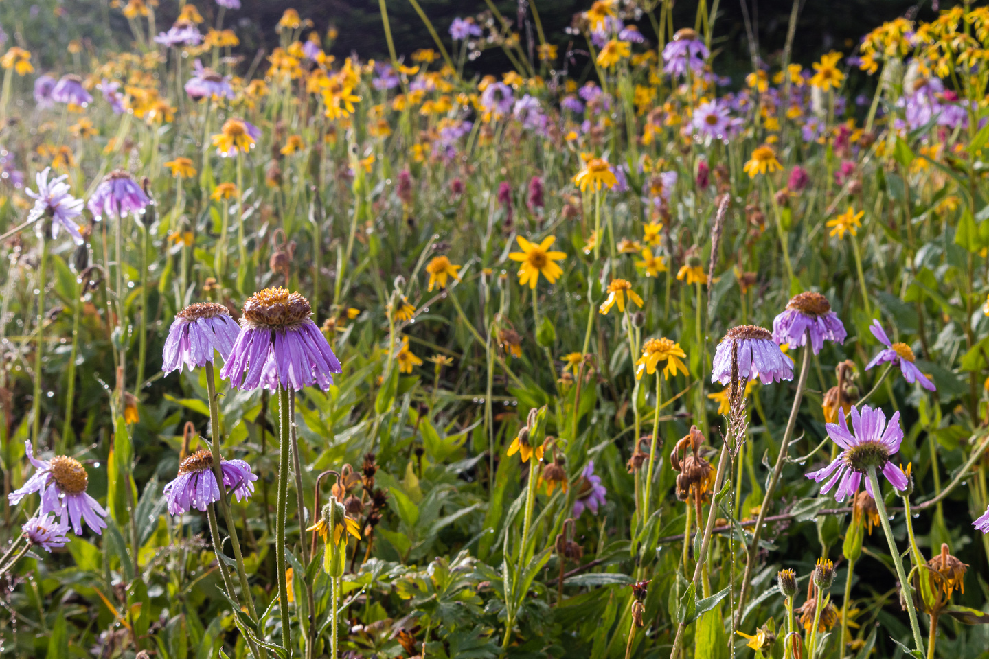 My mood improves with the wildflower display in the Molar Meadows.