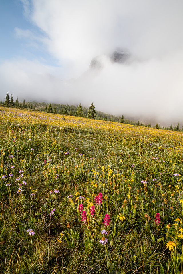 Wildflowers in the Molar Meadows with Noseeum rising in the clouds above.