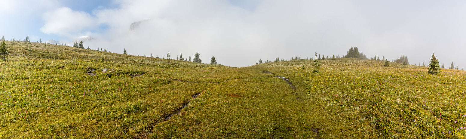 Above tree line in the Molar Meadows.