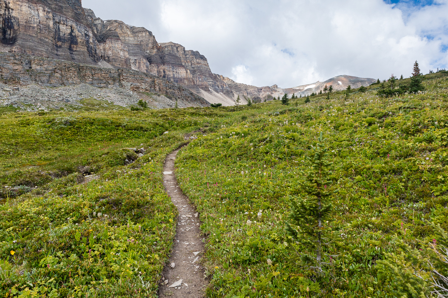 Ascending green alpine meadows to North Molar Pass.