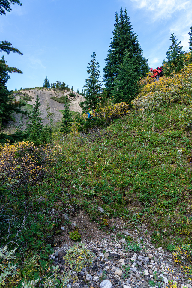 Descending a steep gully to the upper stretches of the north branch of Mosquito Creek.
