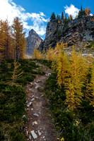 Hiking through a larch forest between Scarab Lake and Mummy Lake.