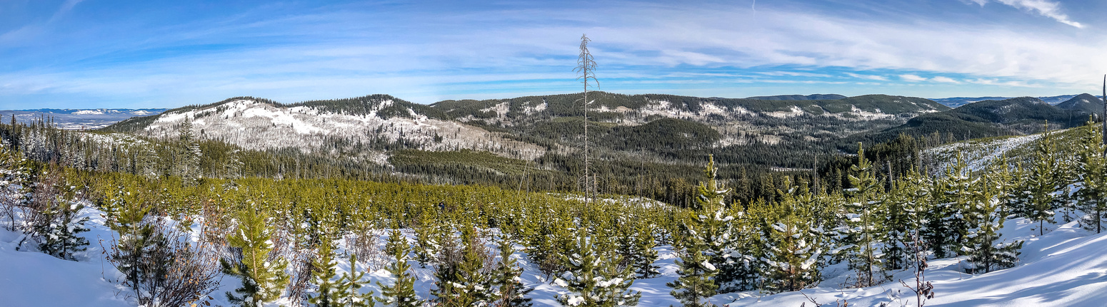 Views from the Christmas Tree forest on Seventy Buck. Eagle Hill at left with the Grouse / Sibbald Ridge at center.