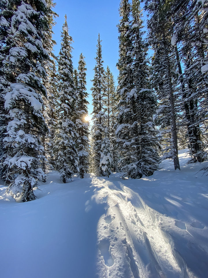 Skiing down to Silverton Creek through moderately tight trees.