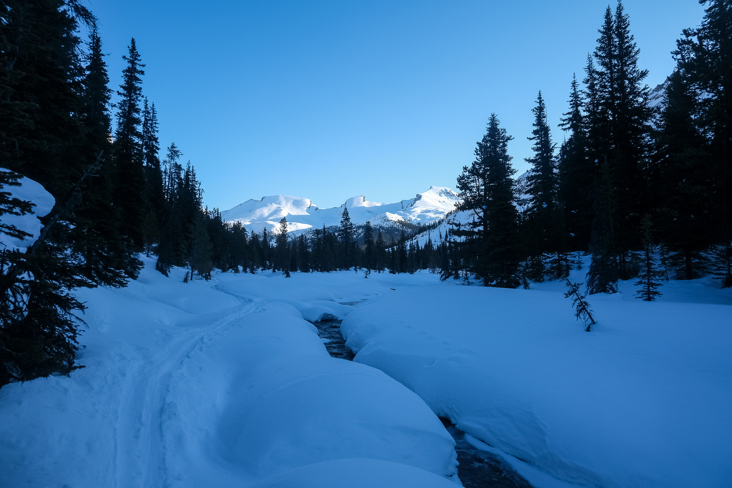 Skiing up the Mosquito Creek trail.