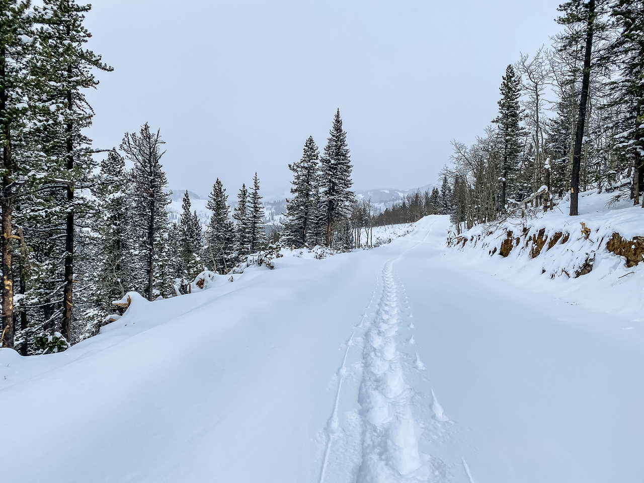 Following my approach track along the Blue Bronna logging road.