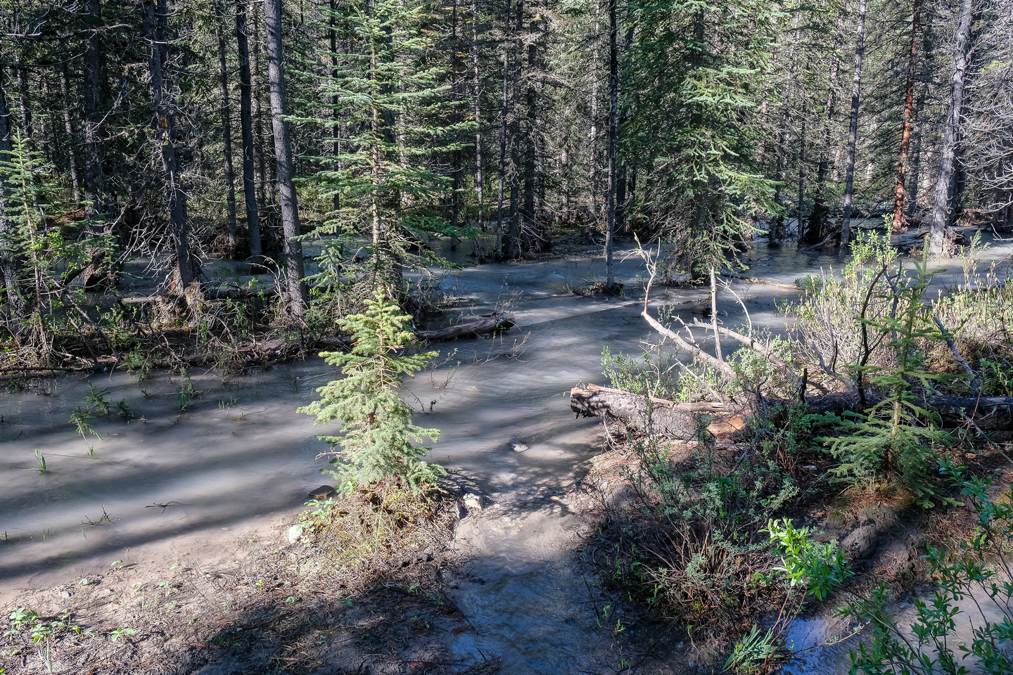 This was what my approach trail looked like thanks to a very high Little Elbow River.