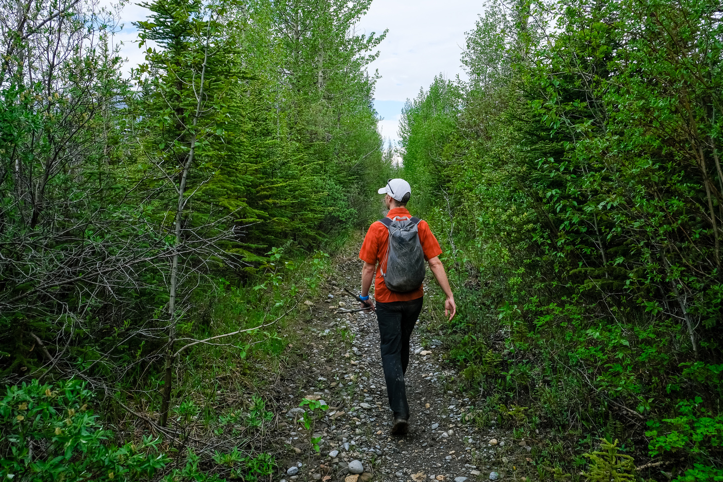 Walking up the Red Deer River / Cascade Fire Road trail.