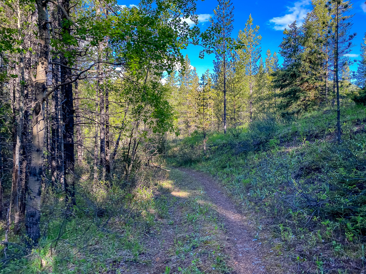 The trail along Baril Creek is a mix of pleasant and less pleasant biking / hiking.