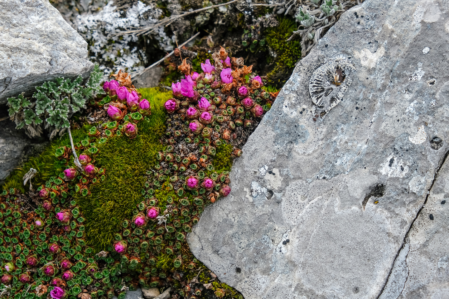 Color and fossil in the rock.