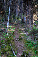 A trail in the forest above the old logging road.